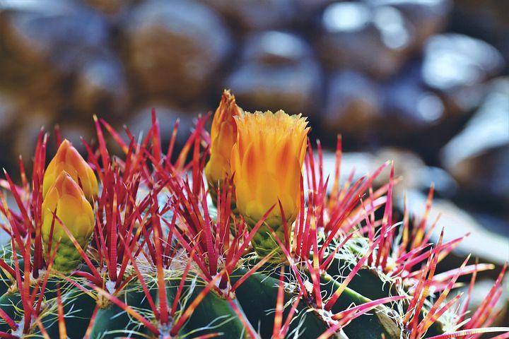 plants native to san antonio