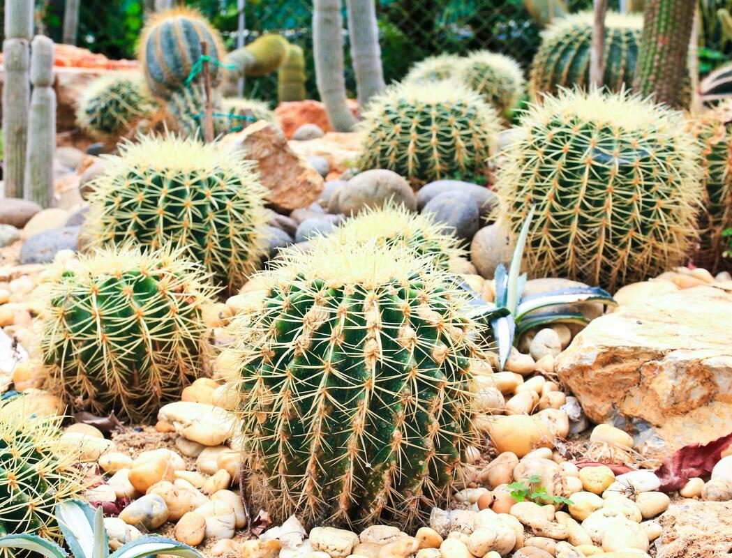 xeriscape texas hill country