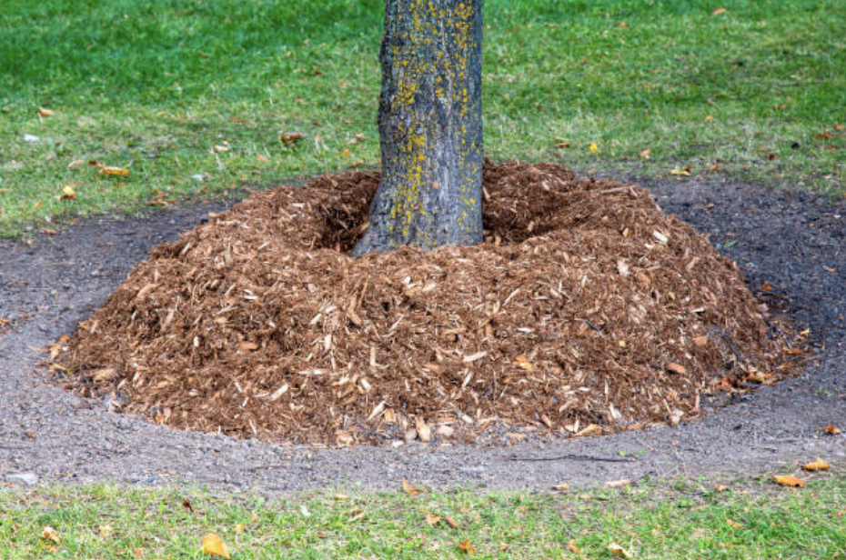 mulching-around-a-tree