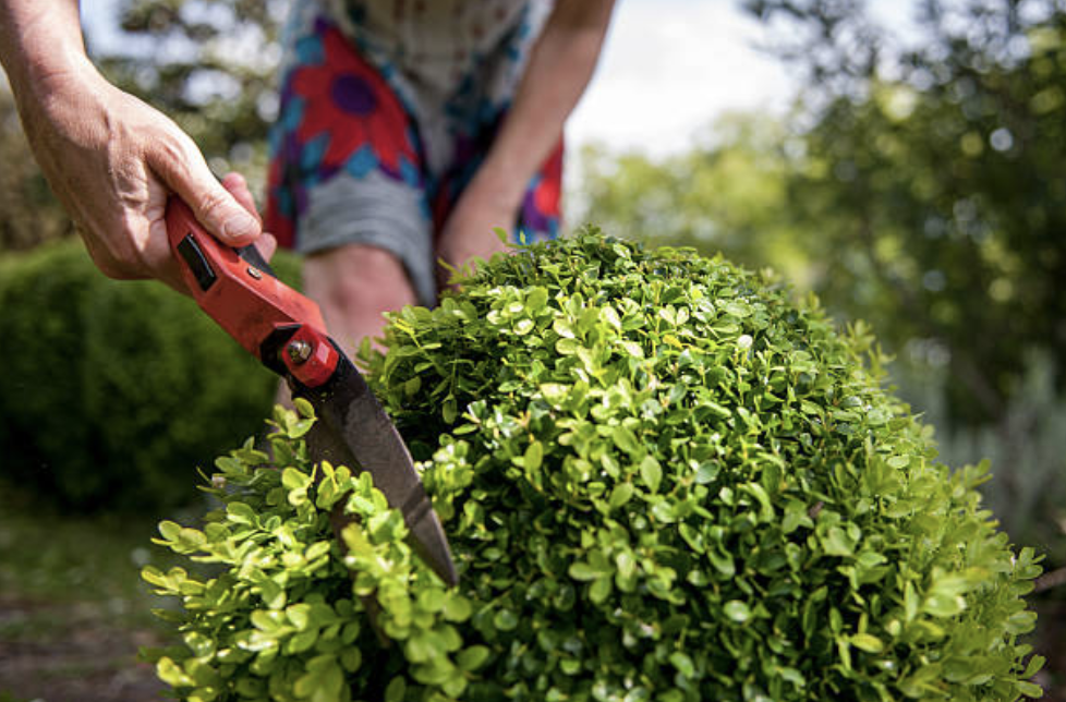 san-antonio-shrub-trimming-service